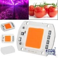 Chip Led Cob 50w Full Spectrum 220V cultivo indoor