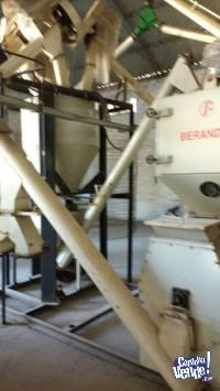 Planta para balanceados en pellets Berandevi