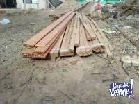 50 clavadera saligna 2x1 de 3.65 mts