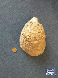 Ostra fósil