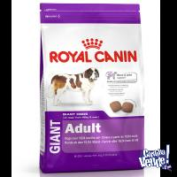 ROYAL CANIN GIANT ADULTO X 15KG