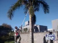 Realizo corte de cesped, limpieza de terrenos, podas 3513797