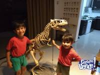 Permuto Dinosaurio Gigante 1,40 mts alto x 2,00 mts largo